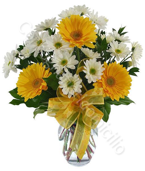 Consegna fiori a domicilio bouquet di gerbere gialle e for Fiori gerbere