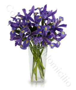 consegna-fiori-a-domicilio-bouquet_iris_blu