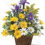 consegna-fiori-a-domicilio-cesto_margherite_iris