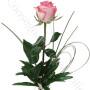 consegna-fiori-a-domicilio-rosa-rosa